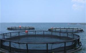 养殖池、浮式网箱、孵化育苗池