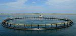 水产养殖鱼类网箱
