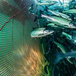 水产养殖网 / 鱼类养殖网箱