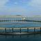 水产养殖鱼类网箱STANDARD Toford Aquaculture
